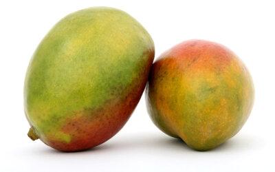 Mangos für Kinderrechte
