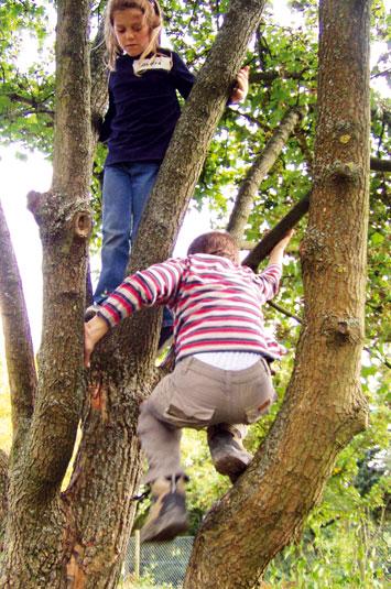 Kinder klettern auf Baum