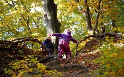 Wie Kinder im Wald wachsen