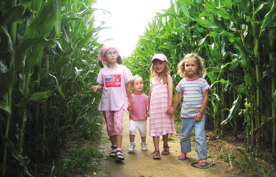 Vier Kinder in einem Gang eines Maislabyrinthes