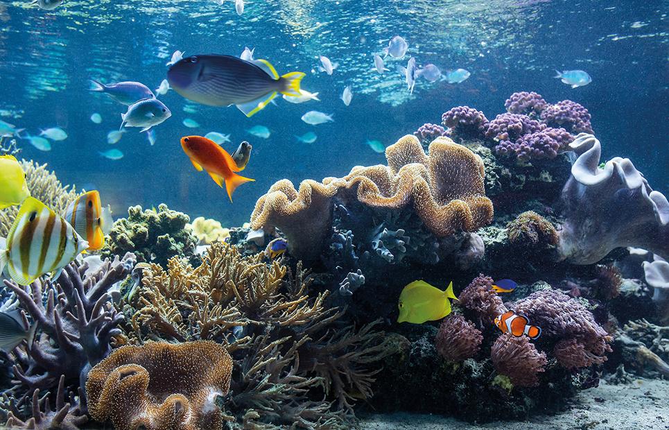 Ansicht eines Salzwasseraquariums