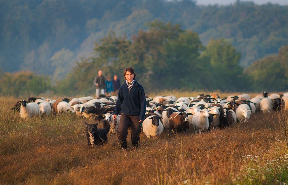 Eine Schäferin mit Hütehund und ihrer Schafherde auf einer Wiese